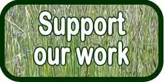 Donate Support Our Work Button 2