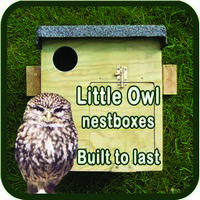 Sidebar 2Little Owl Box