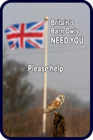 Barn Owl Adaptations The Barn Owl Trust