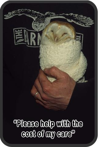 Sidebar 2 Please Help Care For Injured Owl
