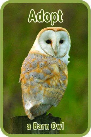 Sidebar 3 Adopt An Owl