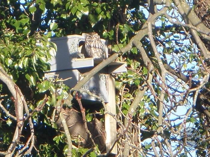 Little Owl Nest Box Indoor Outdoor The Barn Owl Trust