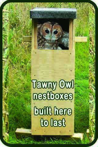 Sidebar 3 Tawny Box