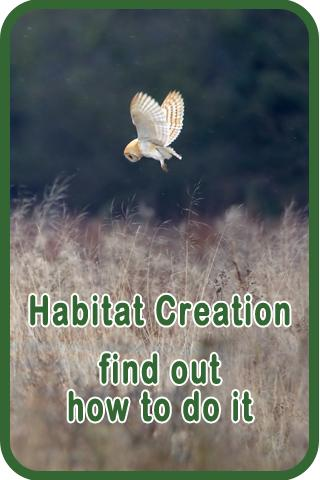 Sidebar 2 Habitat Creation